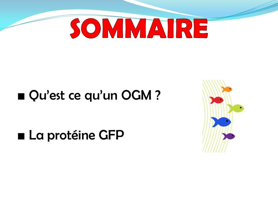 SOMMAIRE ■ Qu'est ce qu'un OGM ■ La protéine GFP