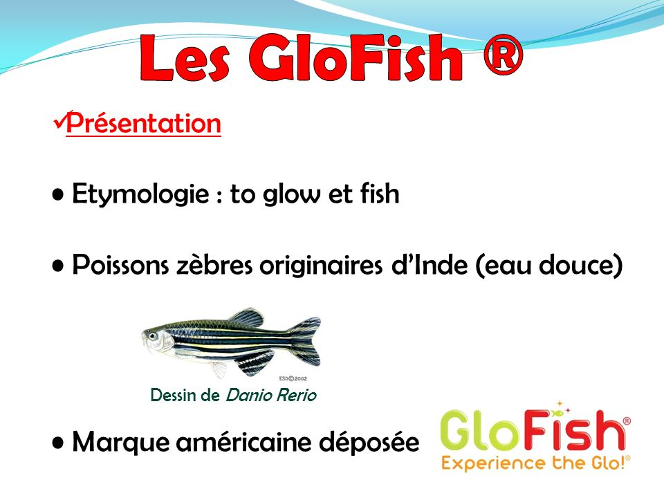 Les GloFish ® Présentation • Etymologie : to glow et fish