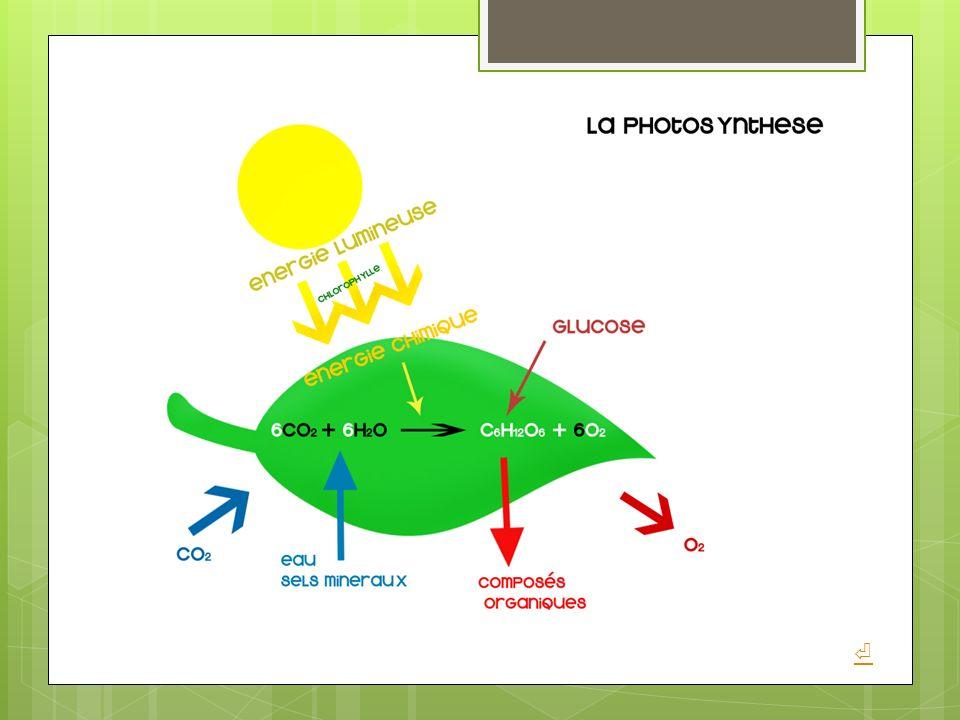 Organismes qui utilisent la lumière comme source d'énergie pour fixer le dioxyde de carbone (CO2).