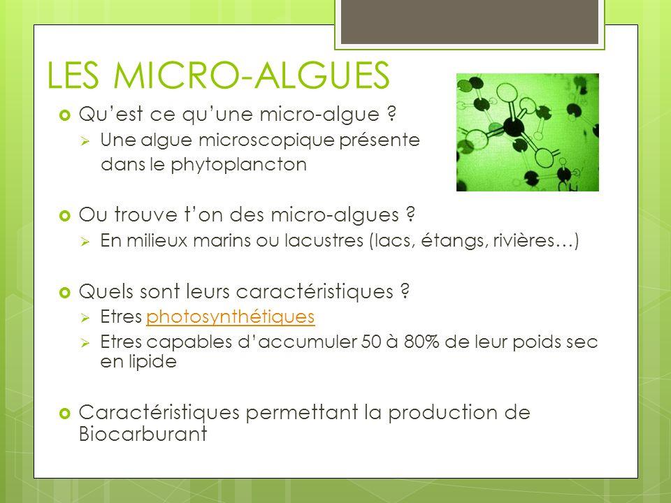 LES MICRO-ALGUES Qu'est ce qu'une micro-algue