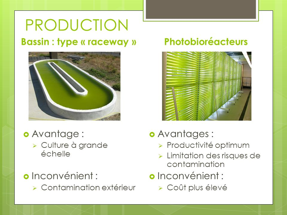 PRODUCTION Bassin : type « raceway » Photobioréacteurs Avantage :