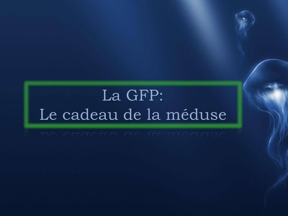 La GFP: Le cadeau de la méduse