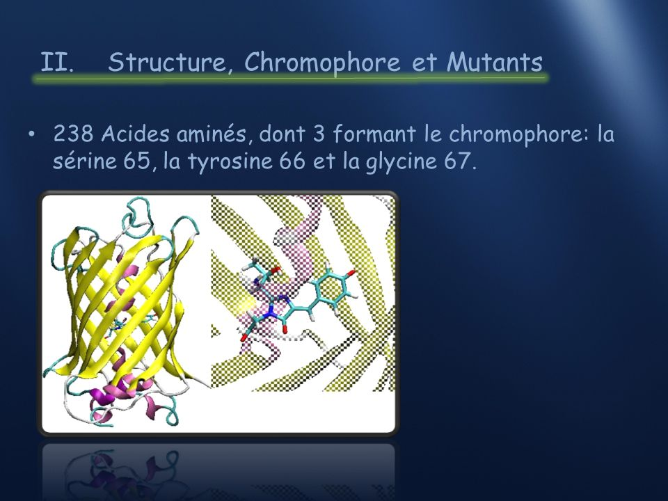 II. Structure, Chromophore et Mutants