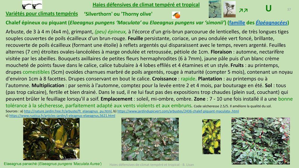 Haies d fensives pour climat temp r et tropical ppt - Pour arroser un jardin il faut compter 6l ...