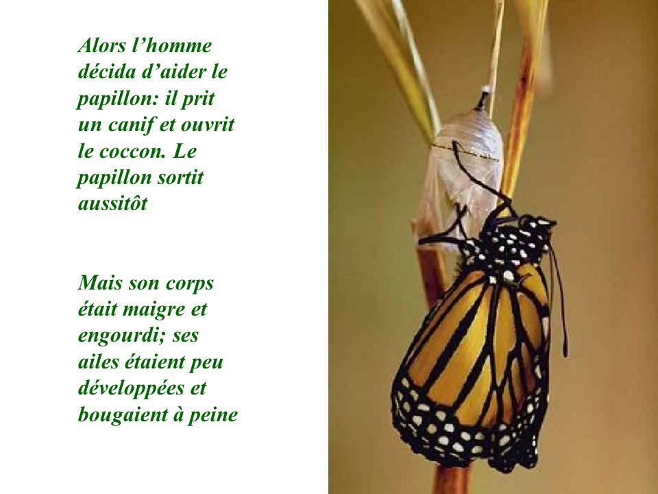 Alors l'homme décida d'aider le papillon: il prit un canif et ouvrit le coccon. Le papillon sortit aussitôt