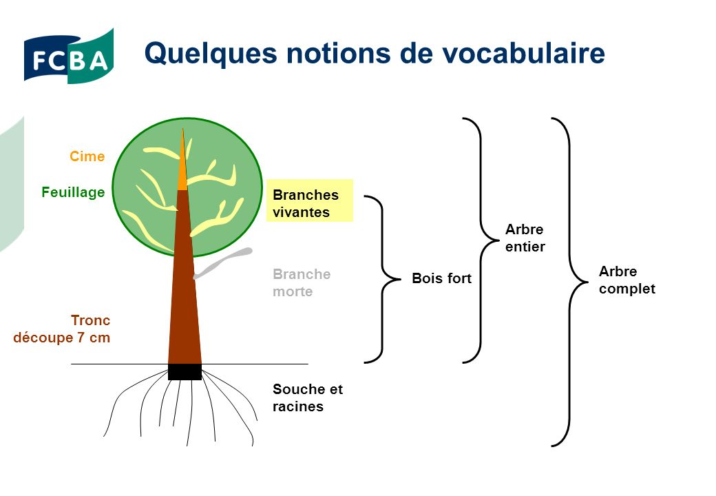 Quelques notions de vocabulaire