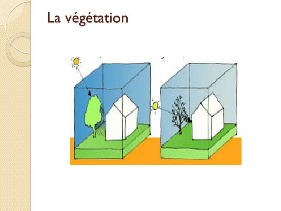 La végétation