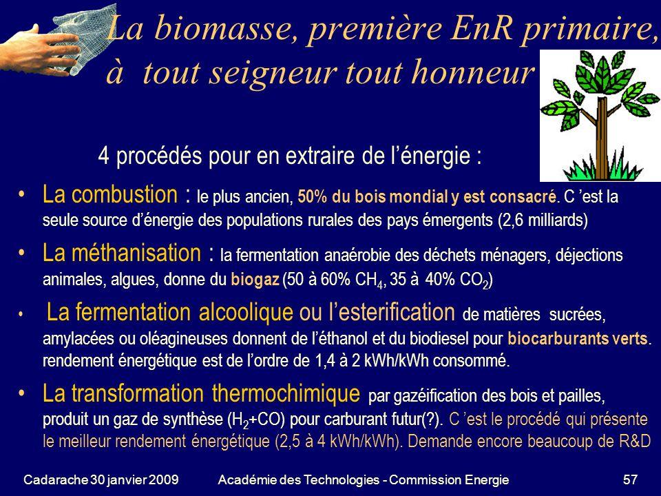 La biomasse, première EnR primaire, à tout seigneur tout honneur