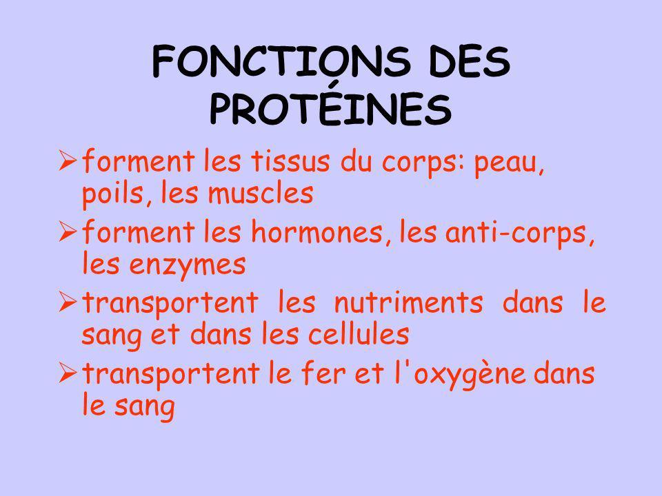 FONCTIONS DES PROTÉINES