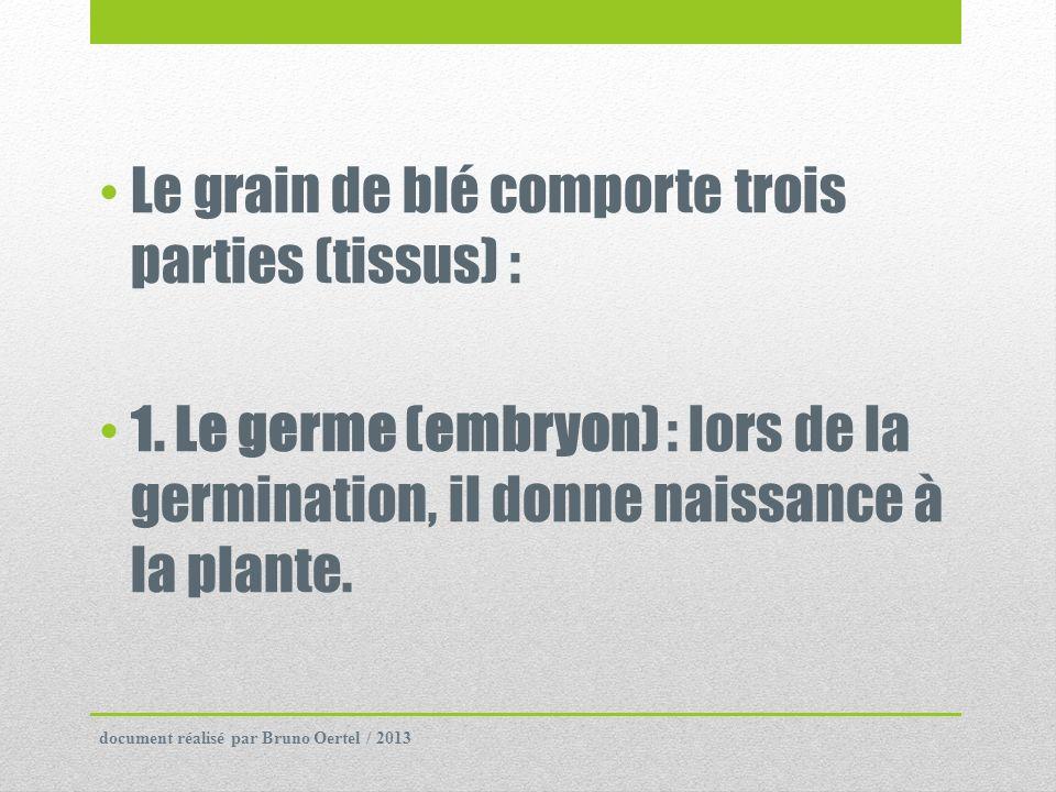 Le grain de blé comporte trois parties (tissus) :