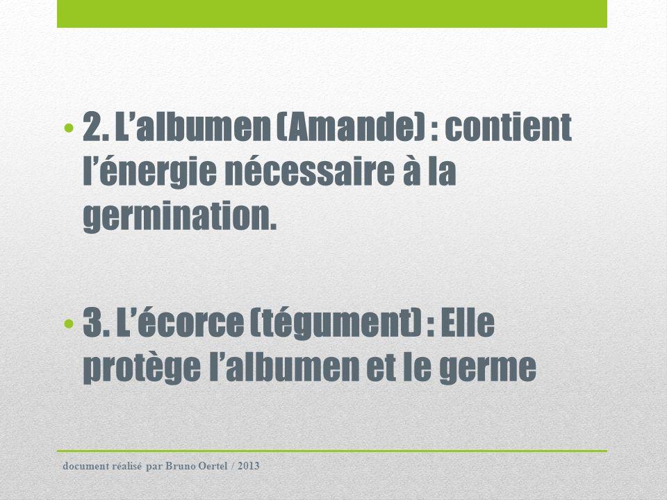 3. L'écorce (tégument) : Elle protège l'albumen et le germe