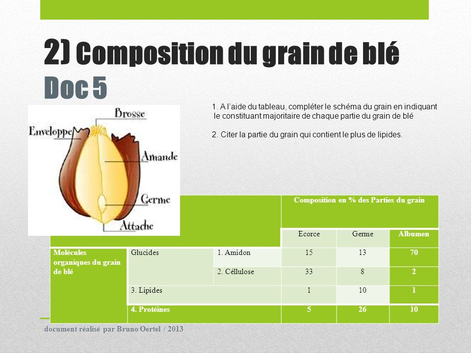 2) Composition du grain de blé Doc 5