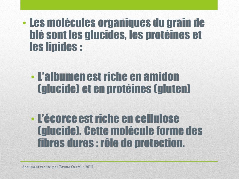 L'albumen est riche en amidon (glucide) et en protéines (gluten)