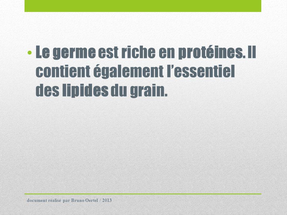 Le germe est riche en protéines