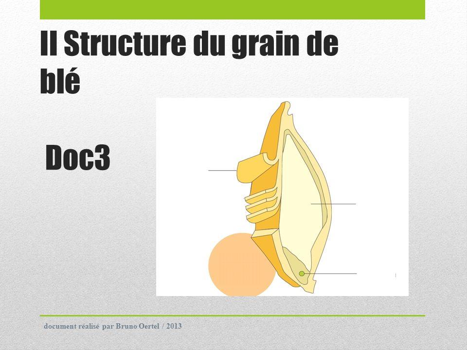 II Structure du grain de blé Doc3