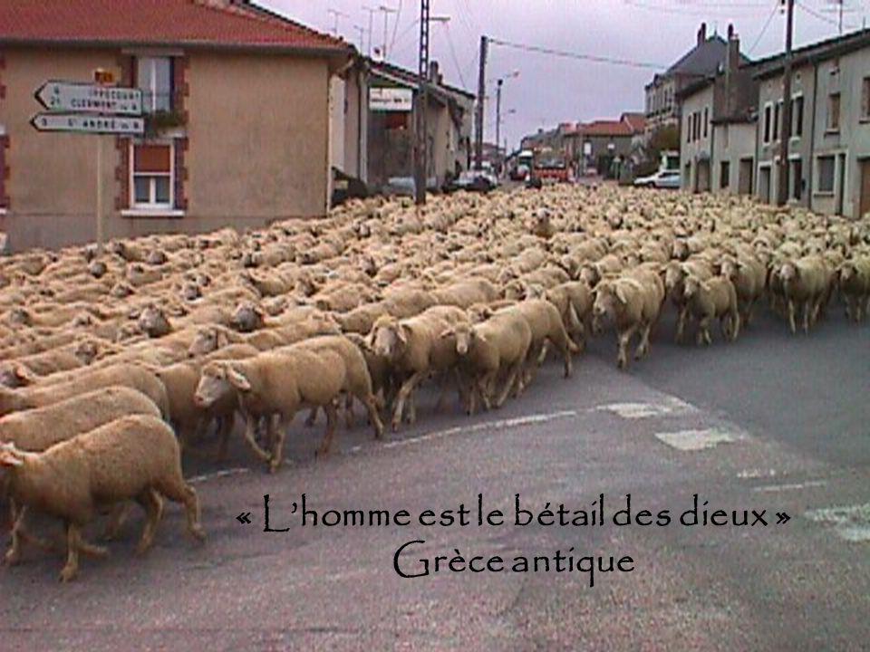 « L'homme est le bétail des dieux » Grèce antique