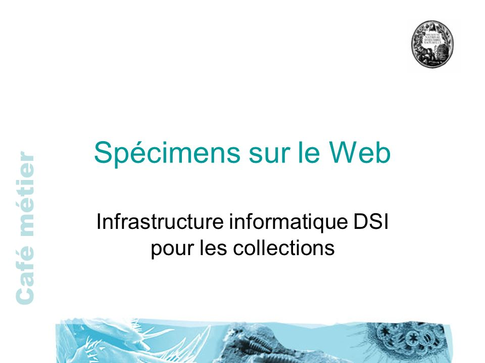 Infrastructure informatique DSI pour les collections