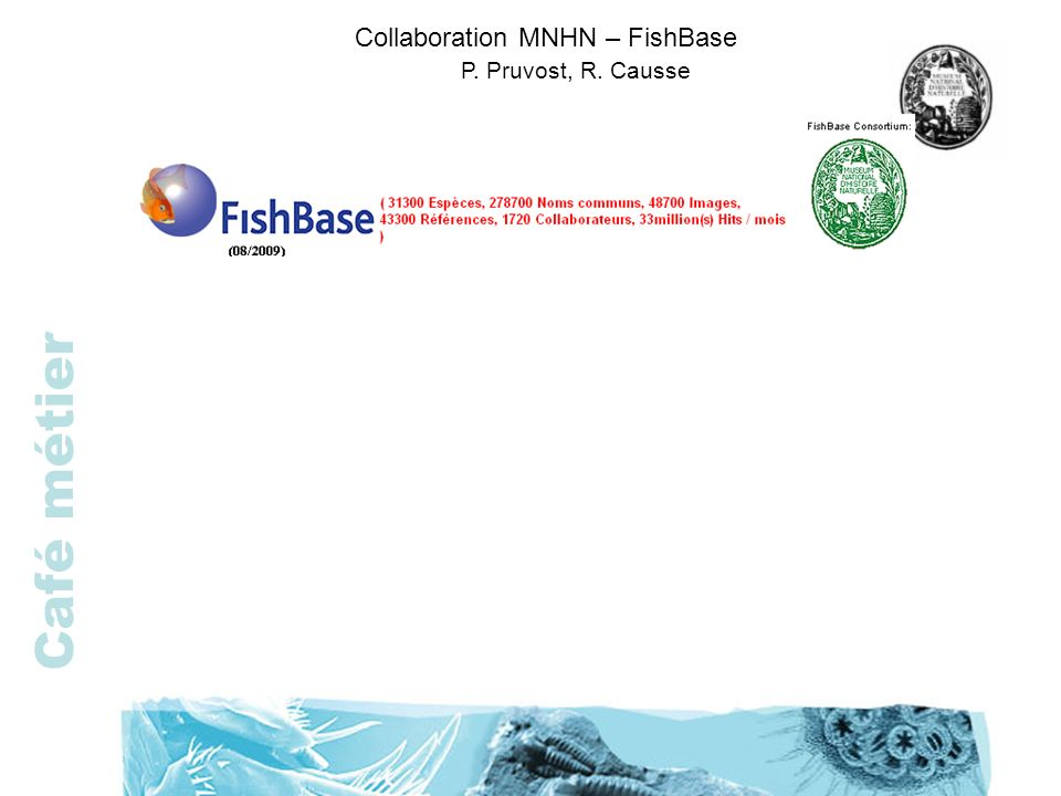 Collaboration MNHN – FishBase