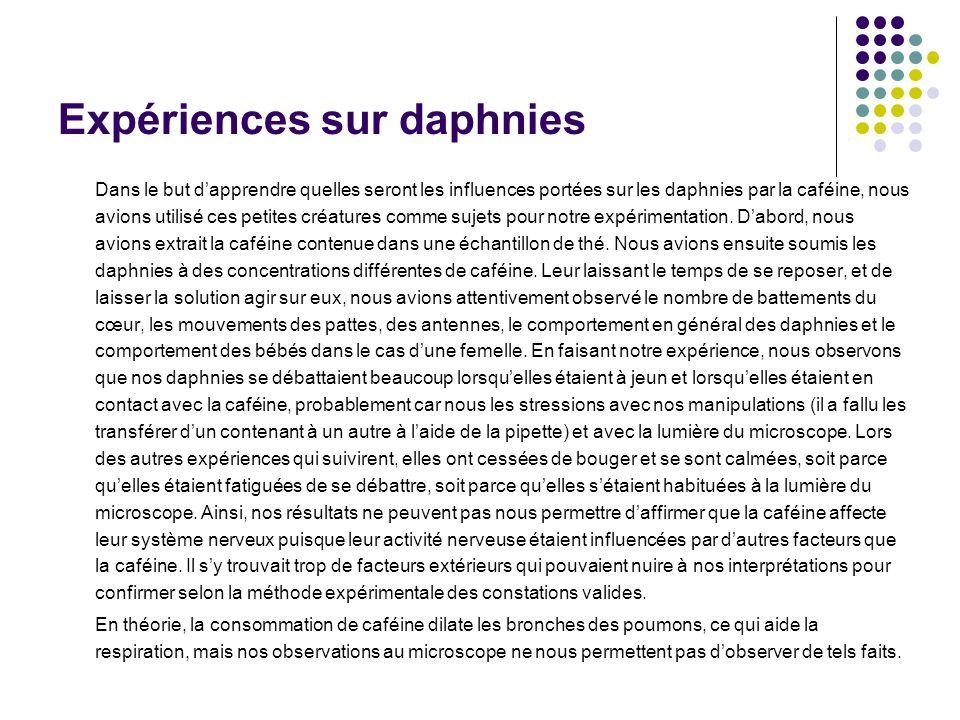 Expériences sur daphnies