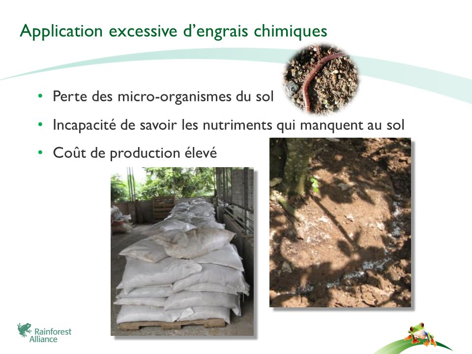 Application excessive d'engrais chimiques