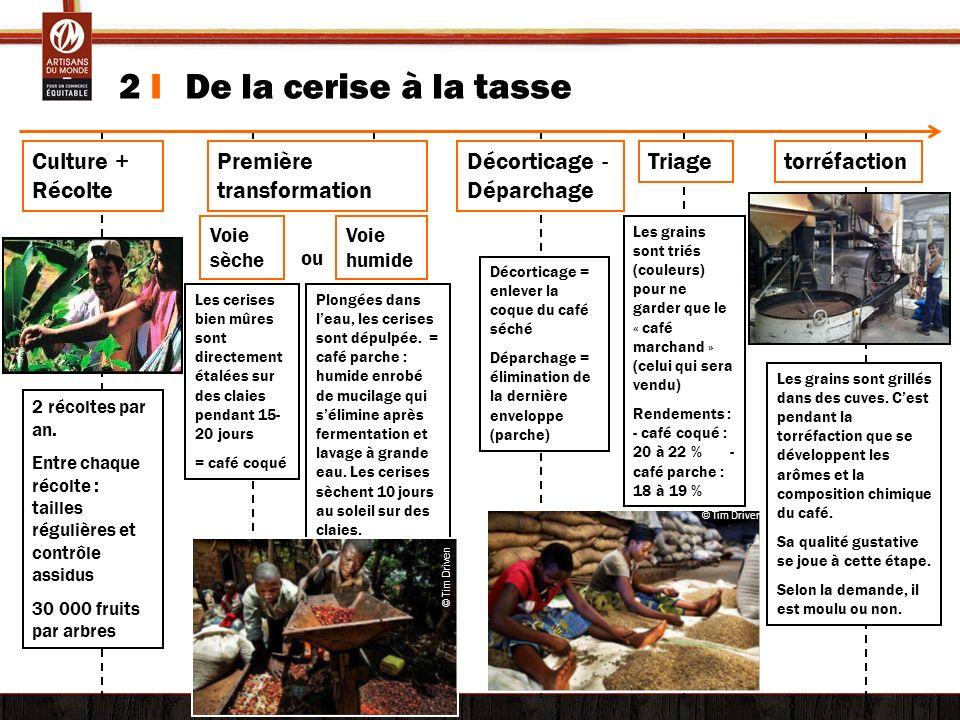 2 I De la cerise à la tasse Culture + Récolte Première transformation