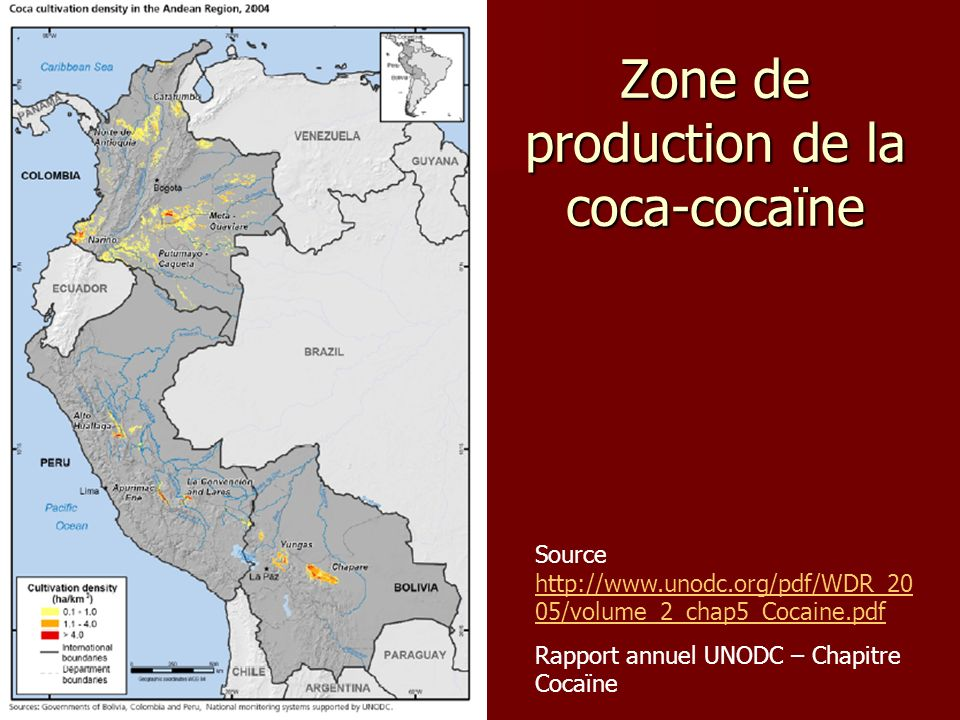 Zone de production de la coca-cocaïne