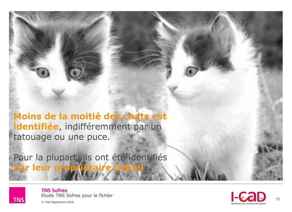 Etude exclusive tns sofres pour i cad etat des lieux de l identification des chiens et chats - Mes chats ont des puces ...