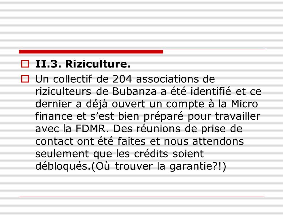 II.3. Riziculture.