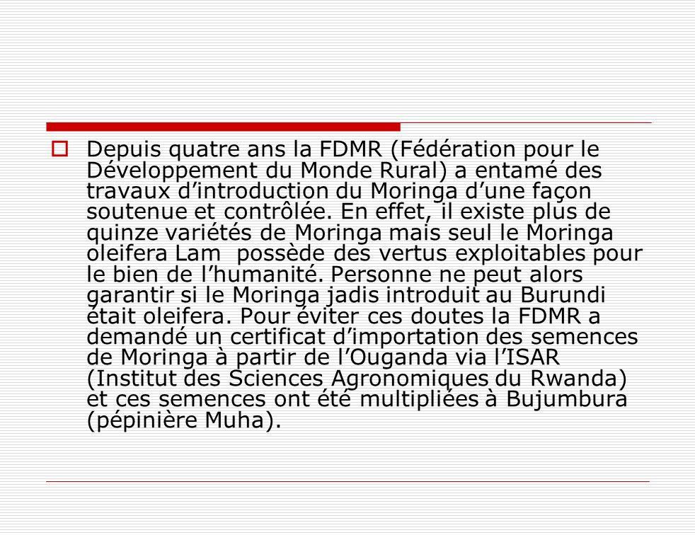Depuis quatre ans la FDMR (Fédération pour le Développement du Monde Rural) a entamé des travaux d'introduction du Moringa d'une façon soutenue et contrôlée.