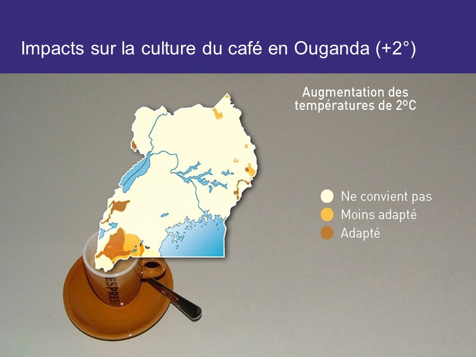 Impacts sur la culture du café en Ouganda (+2°)