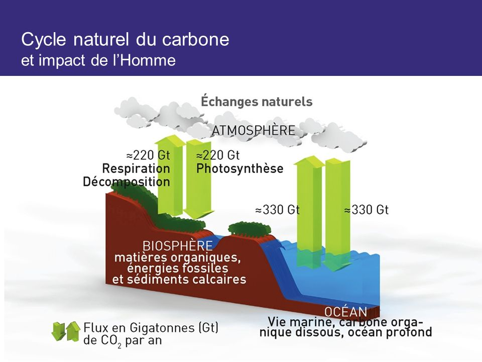 Cycle naturel du carbone et impact de l'Homme