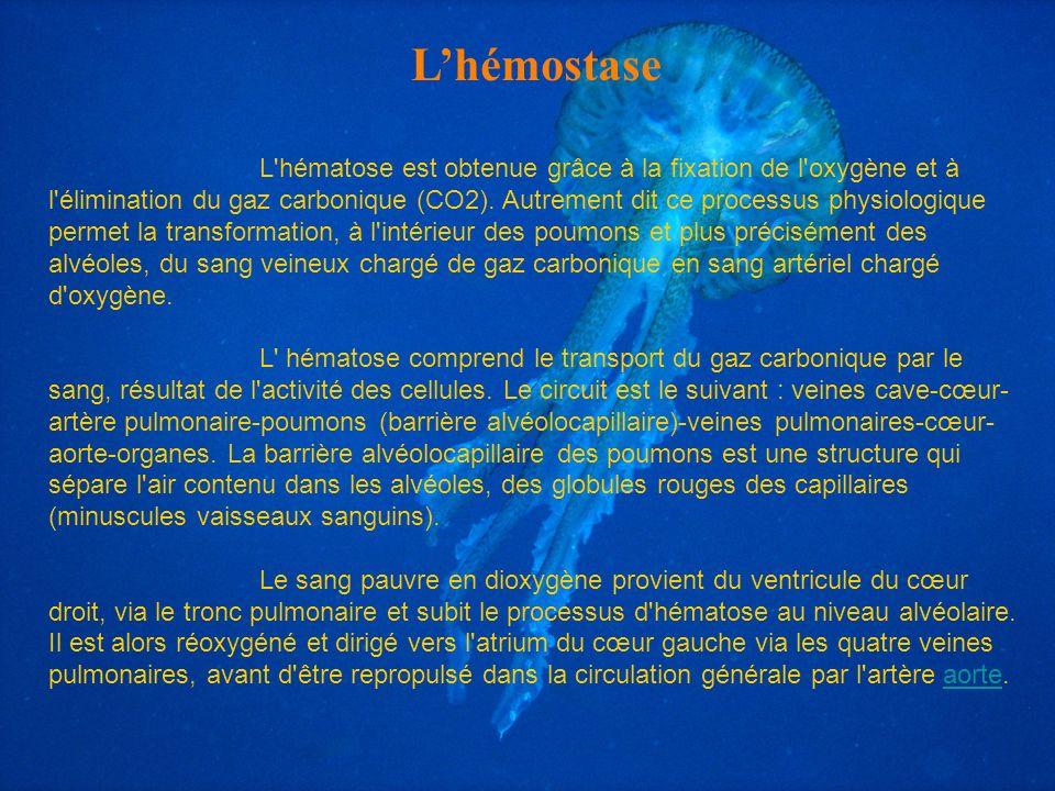 L'hémostase