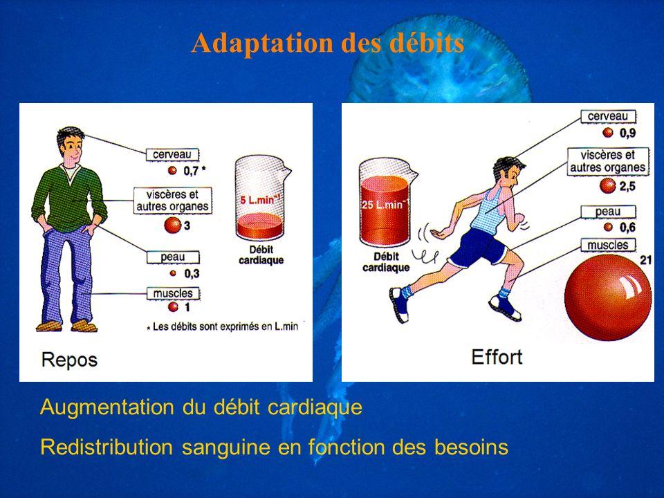 Adaptation des débits Augmentation du débit cardiaque