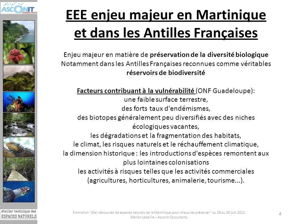 EEE enjeu majeur en Martinique et dans les Antilles Françaises