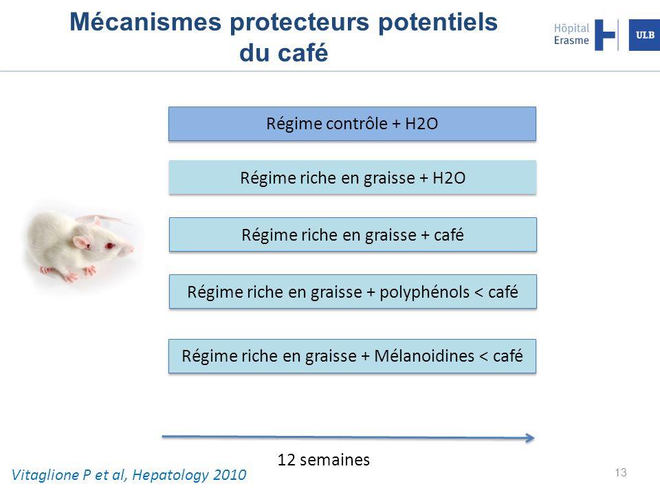 Mécanismes protecteurs potentiels du café