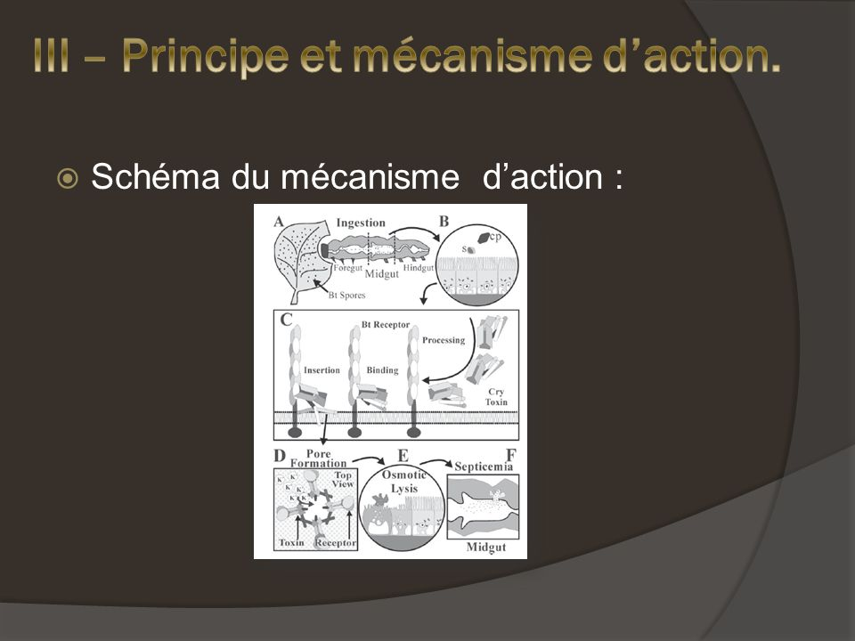 III – Principe et mécanisme d'action.
