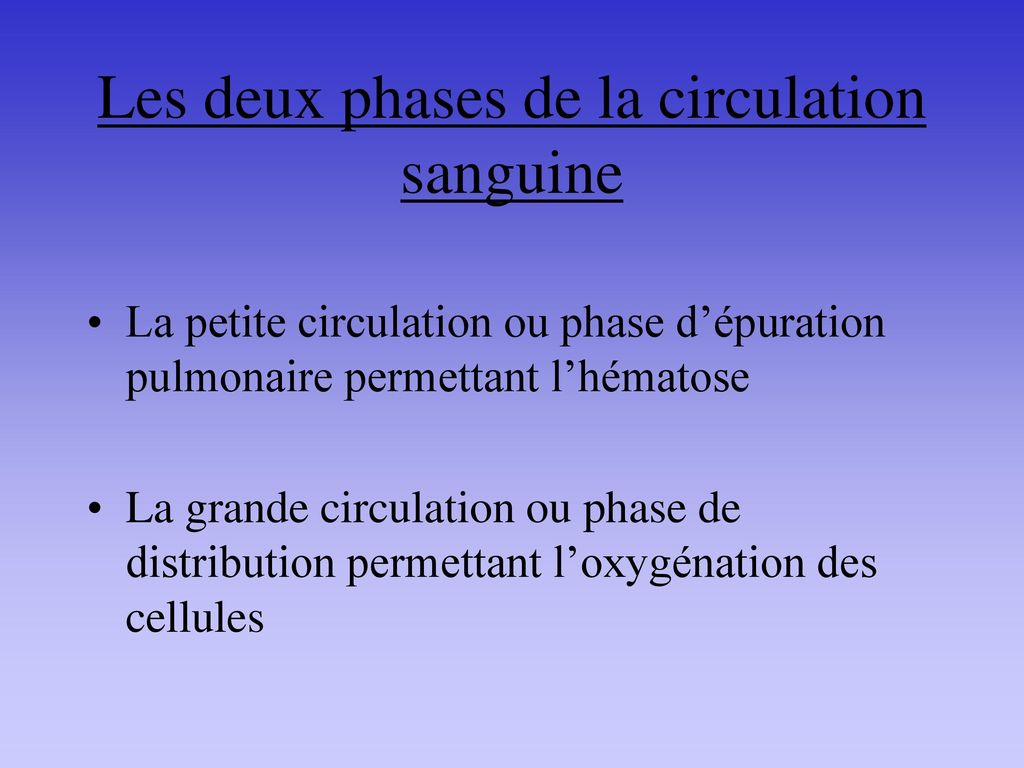 Les deux phases de la circulation sanguine