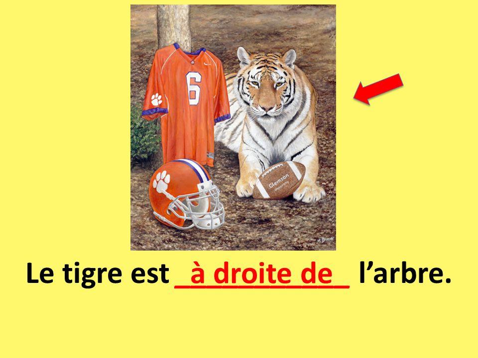 Le tigre est ___________ l'arbre.
