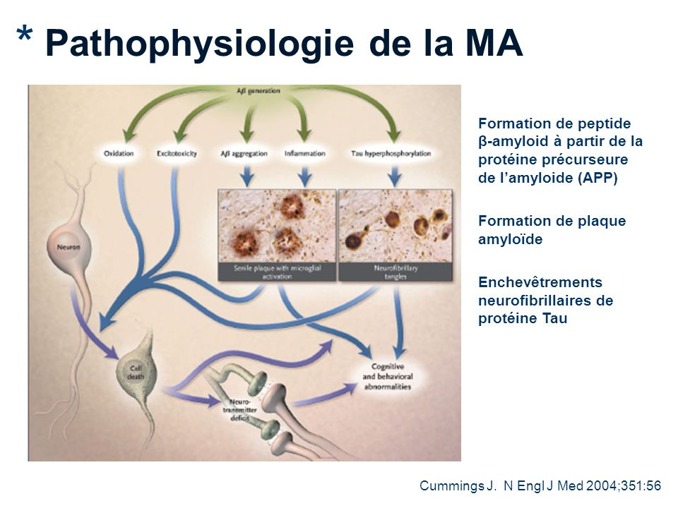 Pathophysiologie de la MA