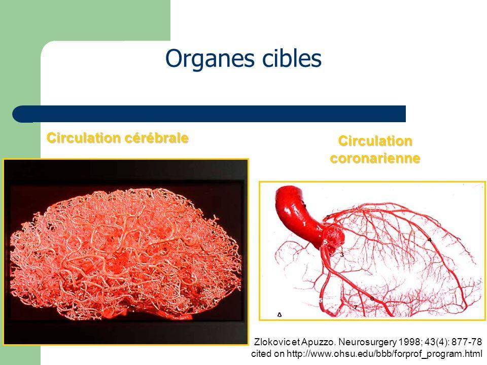 Circulation cérébrale Circulation coronarienne