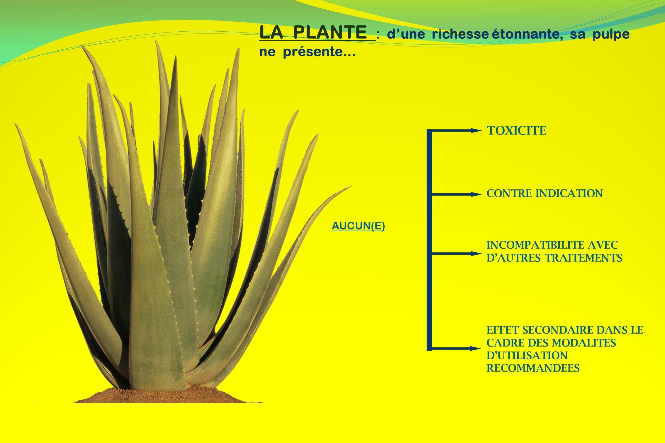 LA PLANTE : d'une richesse étonnante, sa pulpe ne présente…