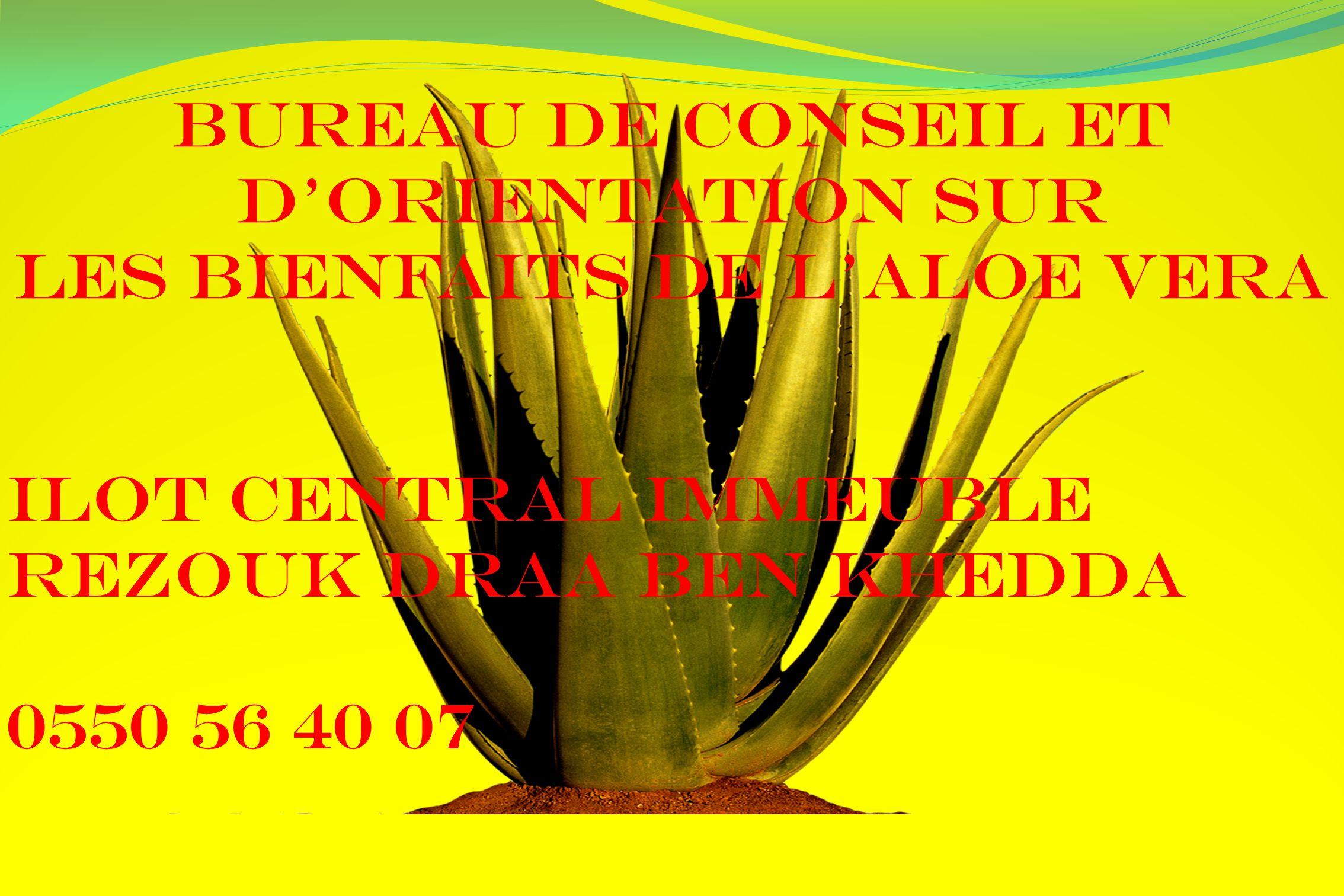 Bureau de conseil et d'orientation sur les bienfaits de L'ALOE VERA