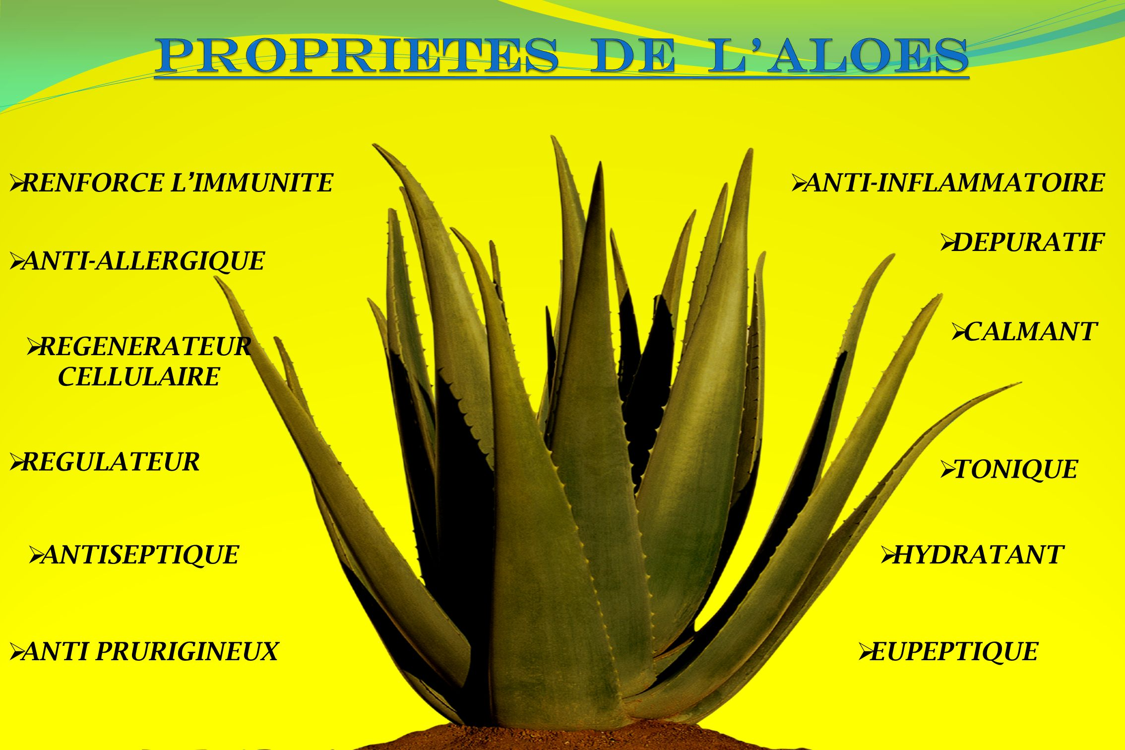 PROPRIETES DE L'ALOES RENFORCE L'IMMUNITE ANTI-INFLAMMATOIRE DEPURATIF