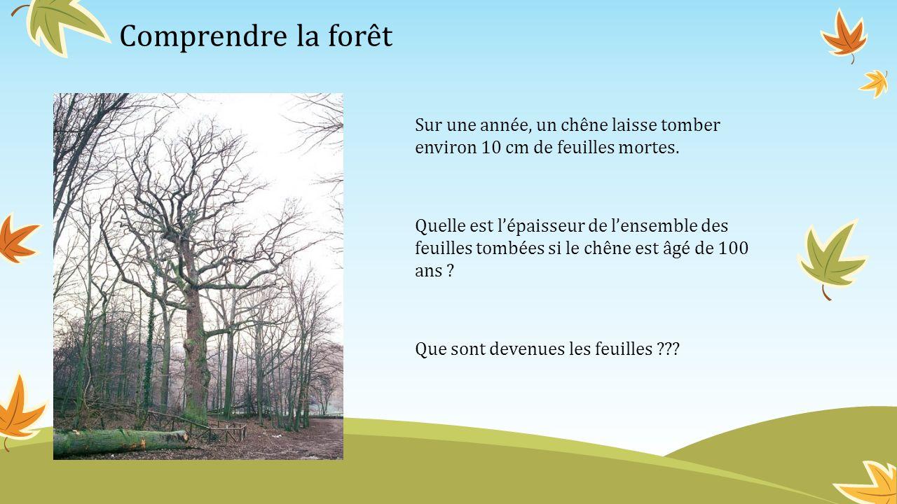 Comprendre la forêt Sur une année, un chêne laisse tomber environ 10 cm de feuilles mortes.