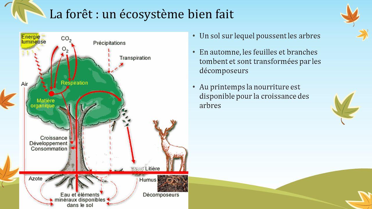 La forêt : un écosystème bien fait