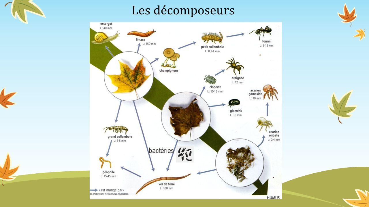 Les décomposeurs
