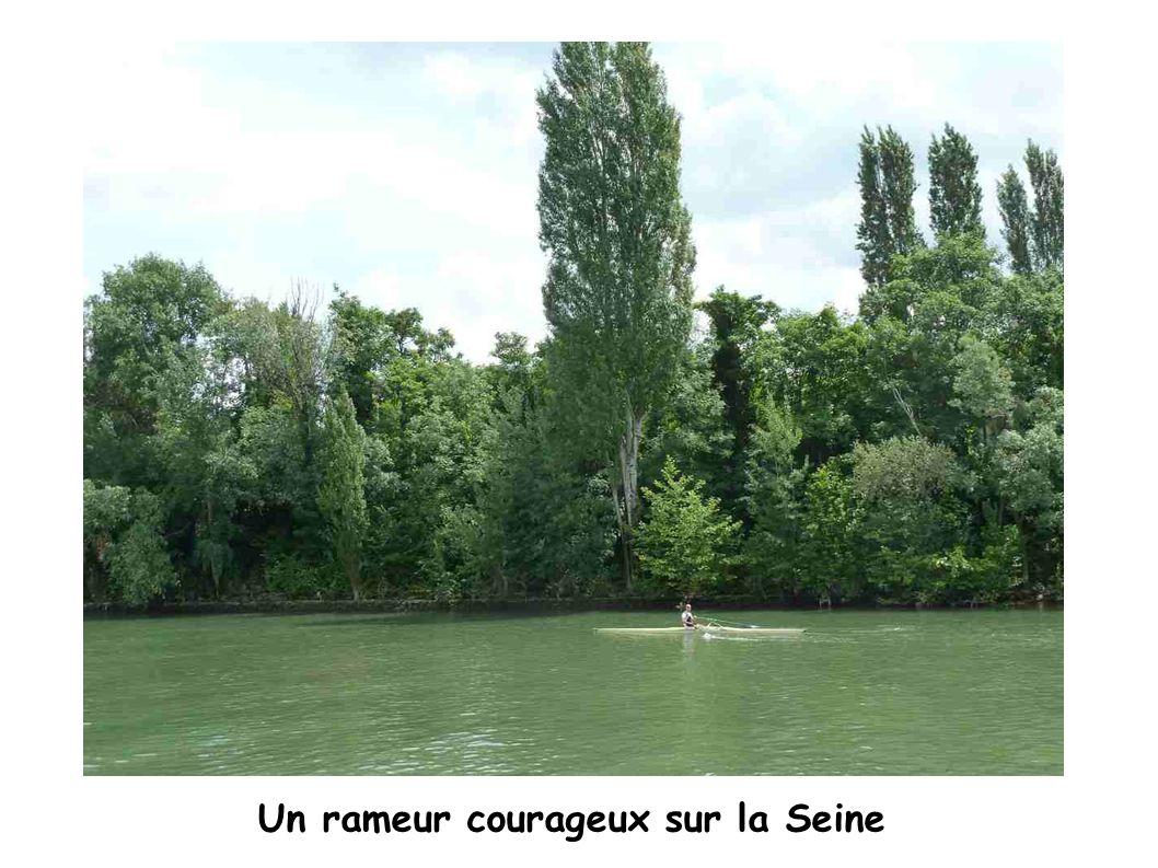 Un rameur courageux sur la Seine