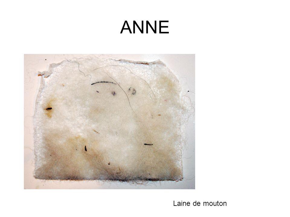 ANNE Laine de mouton