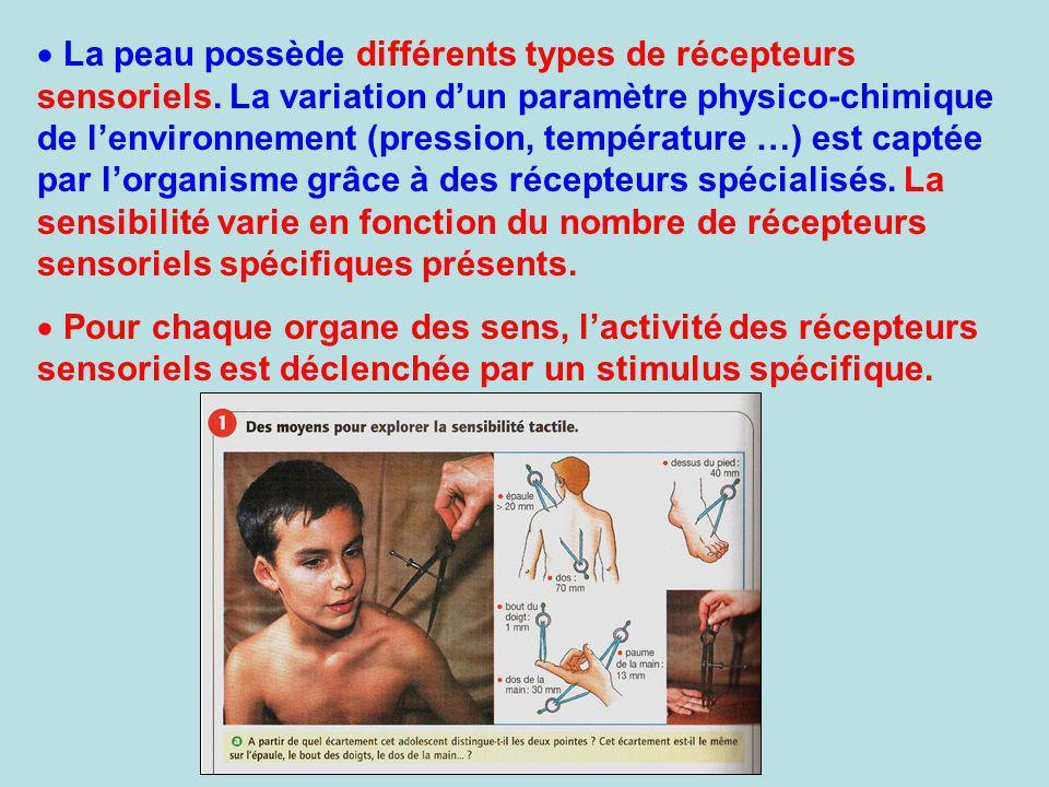 La peau possède différents types de récepteurs sensoriels