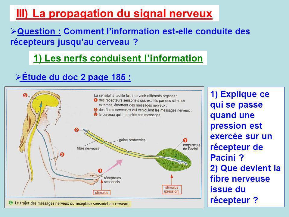 III) La propagation du signal nerveux